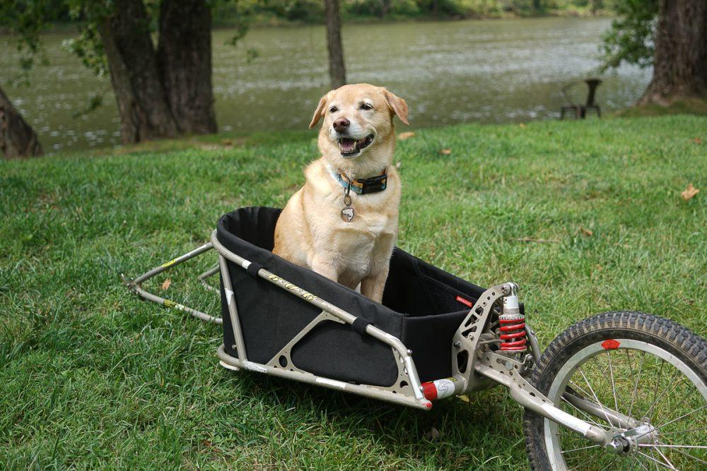 Dogpacking BOB trailer